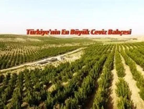 Garten Zum Verkauf In Mugla Region 880000M2 Nussbaum