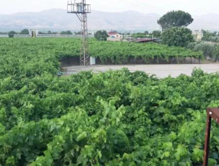 Manisa İli Alaşehir İlçesi 19000M2 Üzümbağı Çiftliği Acil Satılık